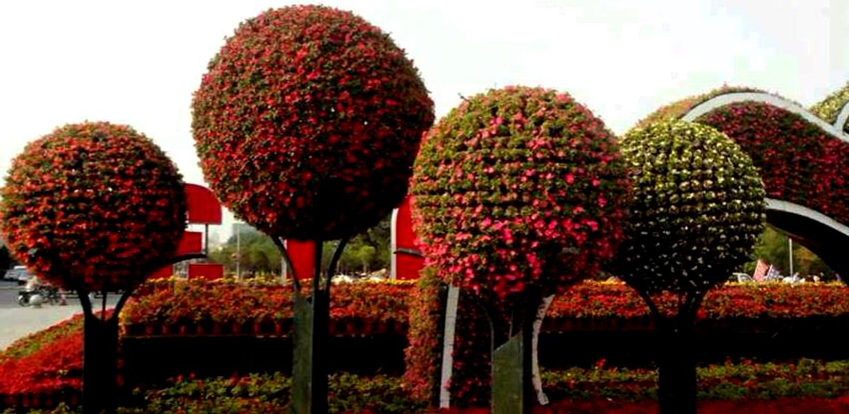 BALL PLANTER SYSTEMS